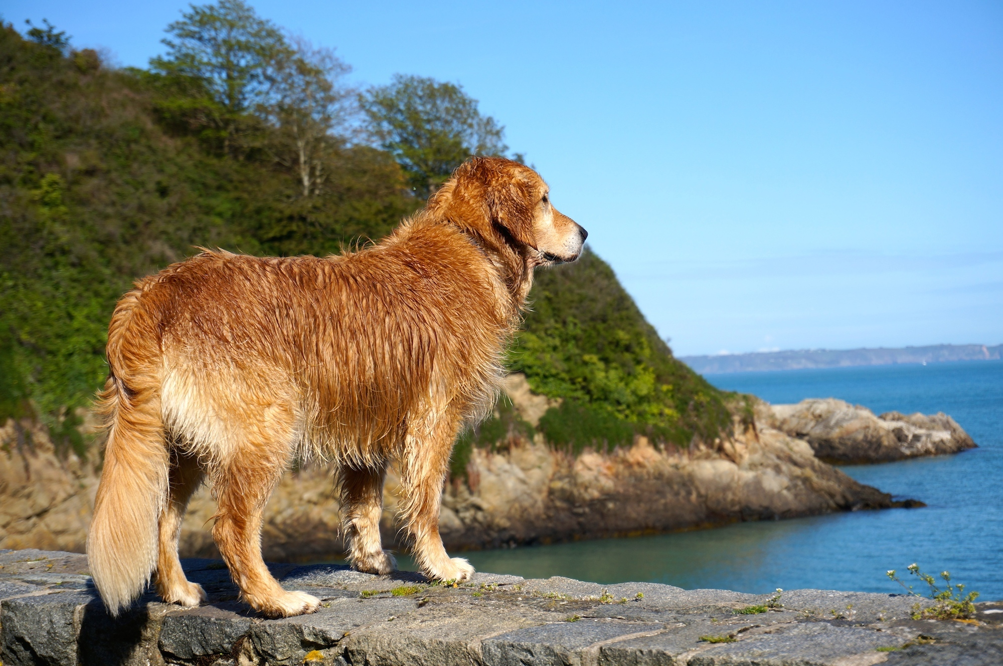 Guernsey 9